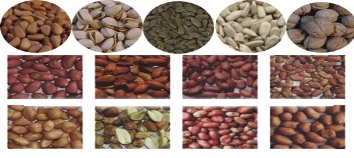 variety of Beans images